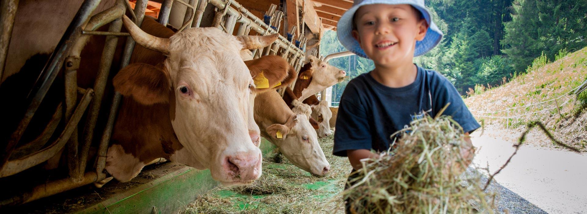 Foto: ©stefano - stock.adobe.com