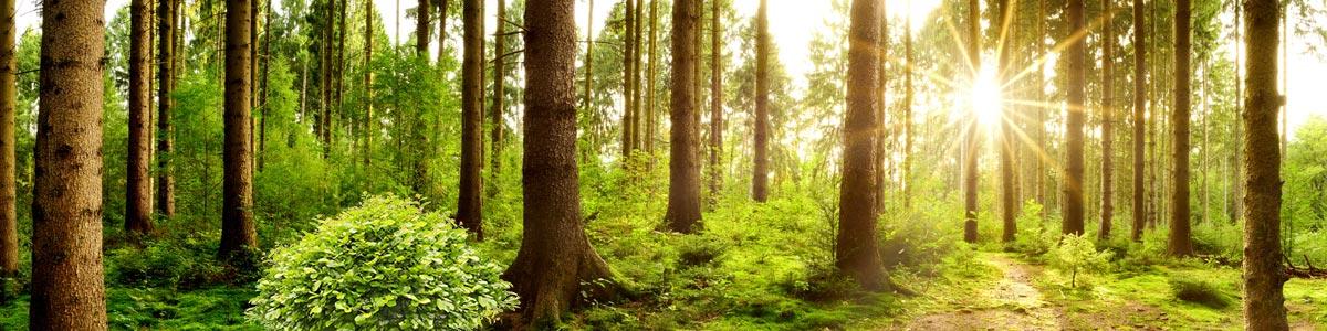 ich glaub ich steh im Wald – zurück in die Natur